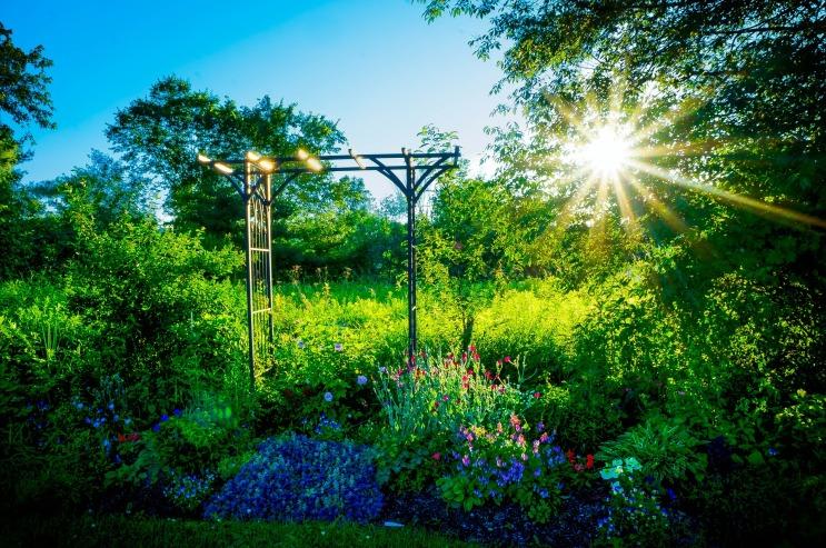 garden-418542_1920