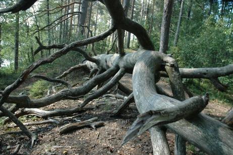 tree-522652_1920